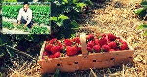 Home Berry Box колко струва, цена