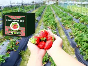 Home Berry Box комплект за отглеждане на ягоди, как да го използвате, как работи