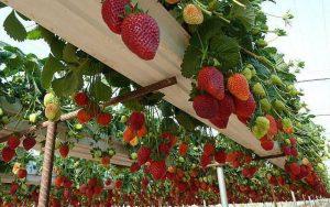 Home Berry Box amazon, производител - България